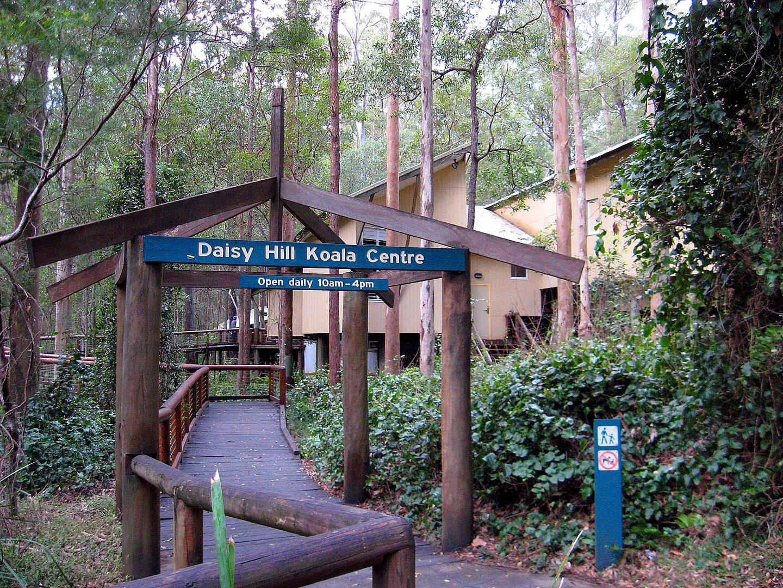 1440px-Daisy_Hill_Koala_Centre,_Queensland,_Australia